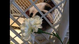 バレンタインデーということで、太助からかーちゃんにお花をプレゼント...
