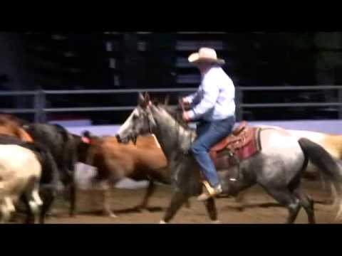 Calgary Stampede 2011 Team Cattle Penning Youtube