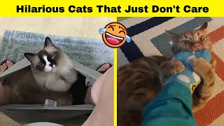 Hilarious Cats That Just Don't Care