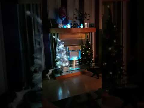 Cats knock over xmas tree in 30 seconds