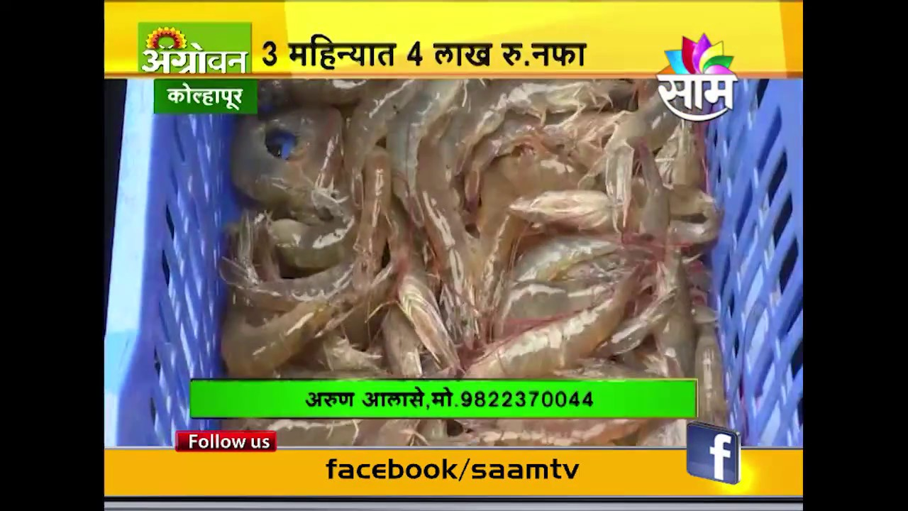 India's first experiment of Prawn cultivation in brackish water land