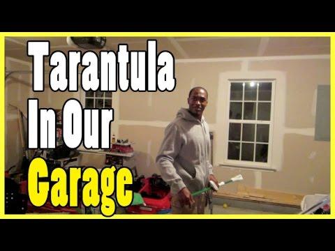Tarantula In Our Garage