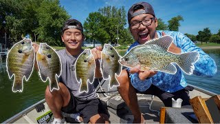 We Found The GIANT Panfish Paradise! (CATCH CLEAN COOK)