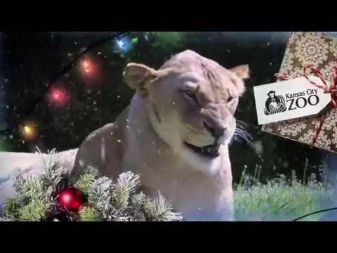 Happy Holidays from the Kansas City Zoo!  // KC Zoo //