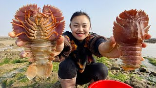 Xiao Zhang drove clams from the sea, and found valuable rhino prawns on the beach.