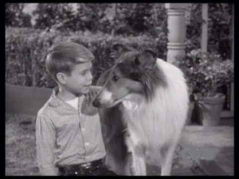"""Download Lassie - Episode #258 - """"The Mysterious Intruder"""" - Season 8 Ep. 3 - 09/24/1961"""