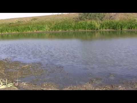 рыболовная база поплавок ахтуба видео