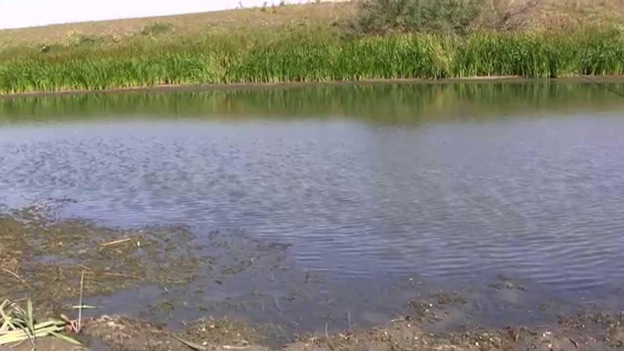 Буффало на поплавок в заливных озёрах! Рыбалка и отдых на живописном острове, база Ахтуба клуб