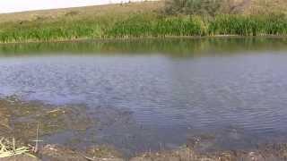 видео База отдыха на ахтубе поплавок