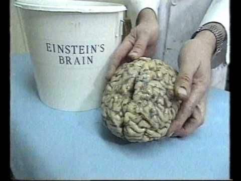 how to make a fake brain in a jar