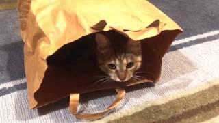 Gambar cover Çantadan Kedi Çıktı! Eğlenceli Kedi izle  Funny Cat