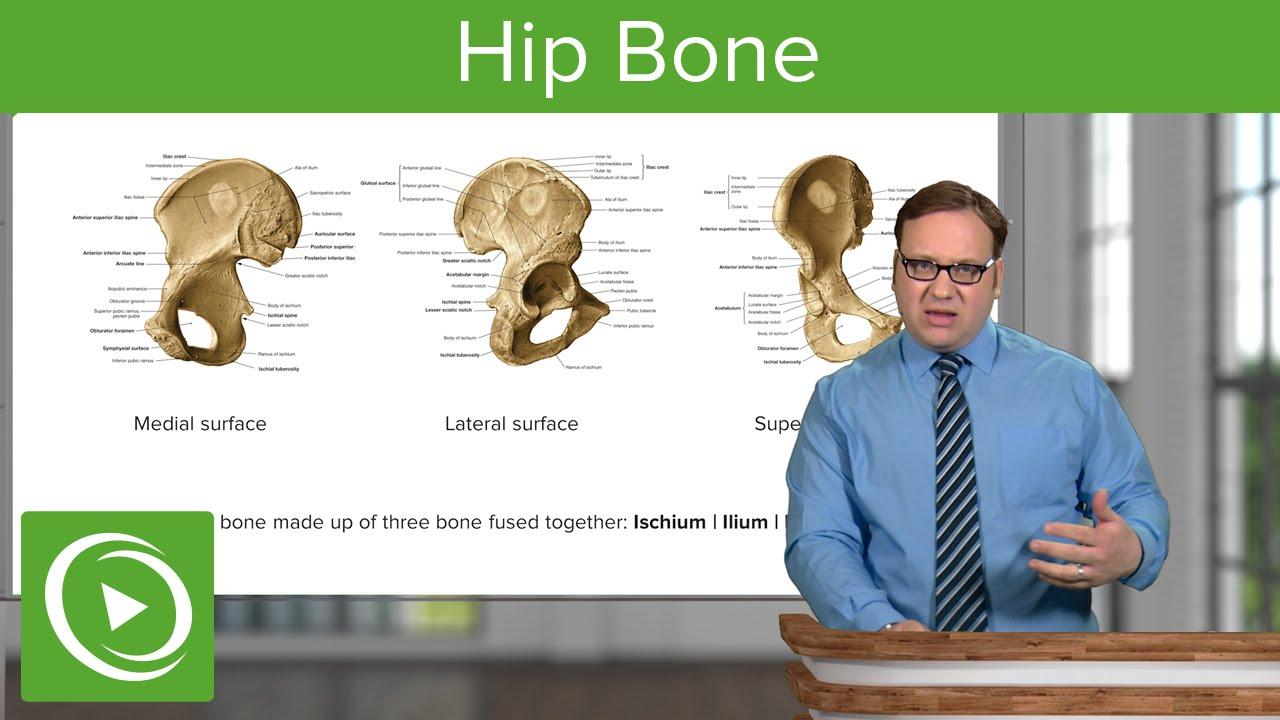 Hip Bones: Ischium, Ilium & Pubis – Anatomy | Lecturio