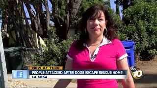 People attacked after dogs escape La Mesa rescue home