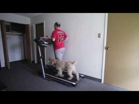 Treadmill 🏃♂️🐶: #TenSecondTuesday