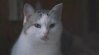 ПРИБЛУДНЫЕ | документальный фильм о мшинских кошках