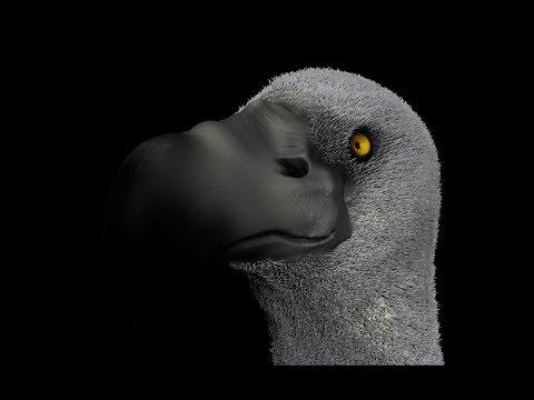 Vulture - Zbrush speed sculpt