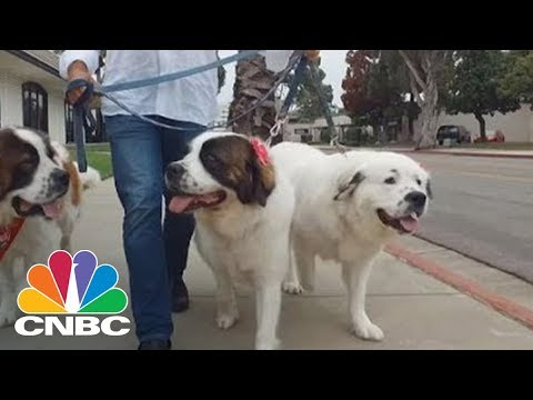 Billionaire Couple Remade Their Private Jet To Fit Their 150lb Dog Passengers   CNBC