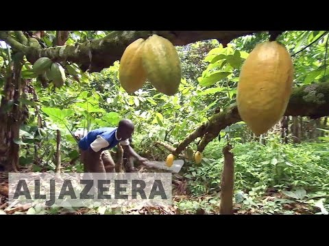 How cocoa helps Nigerian farmers trade out of poverty