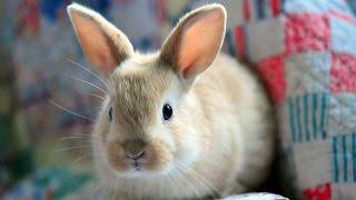 #1258. Кролики и зайцы (В мире животных)