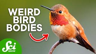 The Strange Anatomy of Hummingbirds