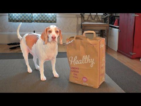 Dog vs. Shaking Bag: Funny Dog Maymo