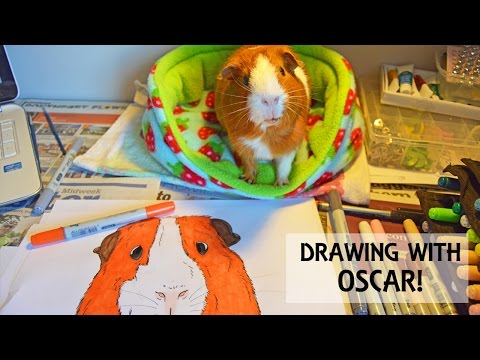 Drawing with my Guinea Pig!