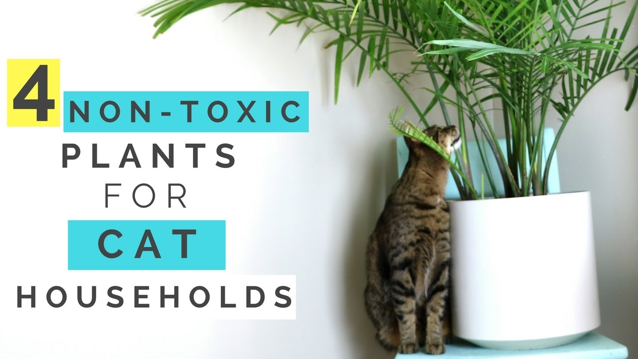 4 non toxic plants for cat households hussey 39 s housemates youtube. Black Bedroom Furniture Sets. Home Design Ideas