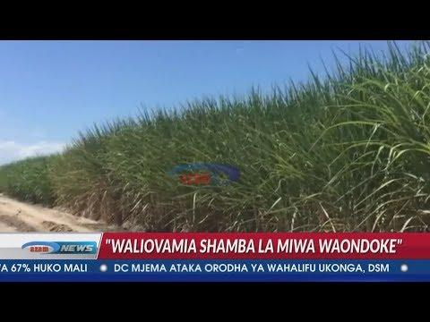 Mkuu wa Mkoa Pwani aamuru wavamizi shamba la miwa la Bakhresa kuondoka haraka