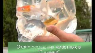 Оттдел домашних животных в Дарвине.avi
