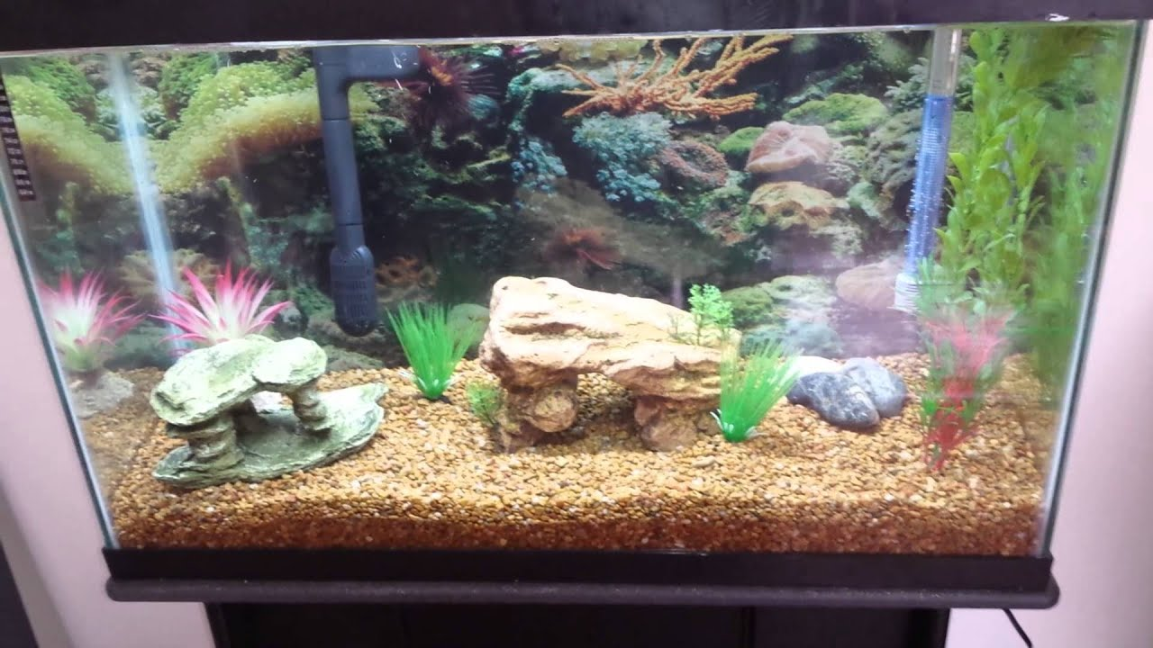 29 gallon freshwater aquarium setup youtube for Freshwater fish tank setup