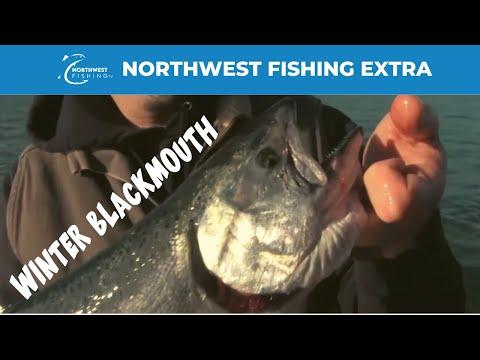 Winter Blackmouth Fishing (Chinook Salmon)