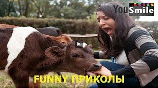 Приколы 2016 Лучшие за декабрь #143 Смешное видео, Смотреть всем, это россия детка, русские прико