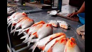 Rescatan cerca de 400 mil peces en río Cauca afectado por Hidroituango | Noticias Caracol