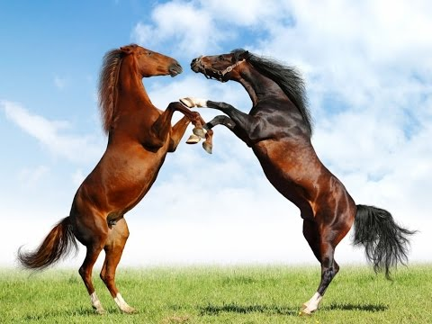 Horses - National Geographic