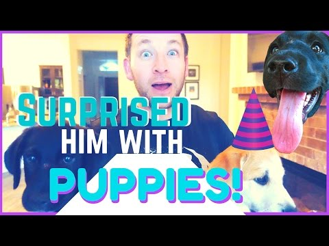 Puppy Surprise     Shocked him with TWO Puppies!