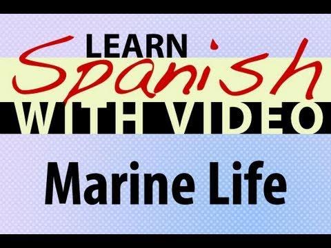 Learn Spanish with Video - Marine Life