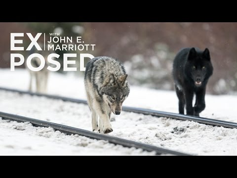 EXPOSED Ep. 09: Balancing Tourism with Conservation in Banff National Park