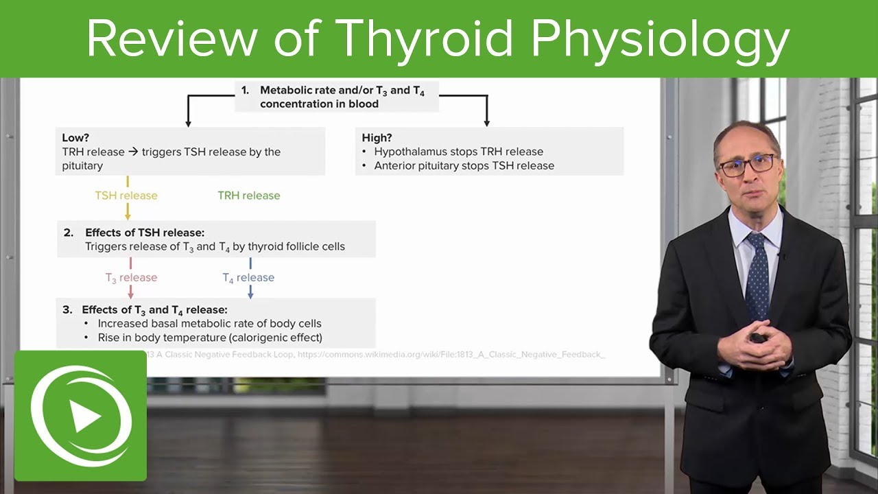 Review of Thyroid Physiology – Endocrinology | Lecturio