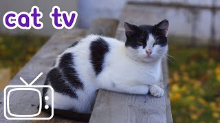 Cat TV: 5 Exciting Hours of Cat Entertainment! (NEW)