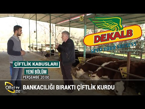 Bankacılığı Bıraktı Çiftlik Kurdu - ÇİFTLİK KABUSLARI #büyükbaş #hayvancılık #besici