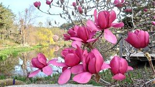 천리포수목원의 봄 [사진,영상:김남숙]