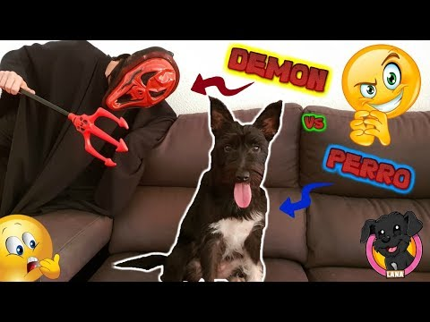 Funny Dog Vs Demon / Mi perro Vs el Demonio! Vídeos de Halloween / Perros divertidos