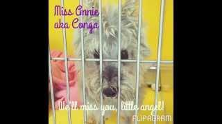 Tribute To Annie A.k.a. Conga