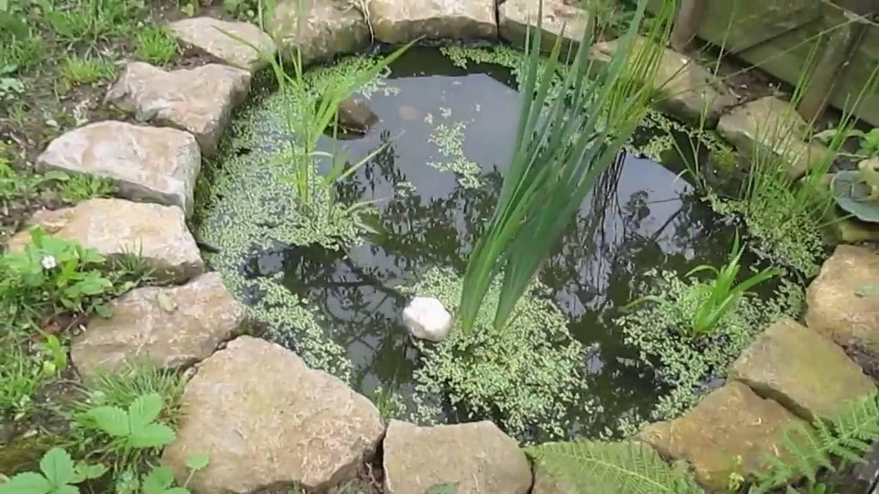 Petit bassin de jardin avec petites b tes d 39 eau douce youtube for Bassin de jardin algues vertes