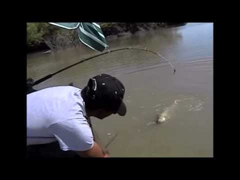 A GOOD ONE ...CHANNEL CATFISH THAT IS !
