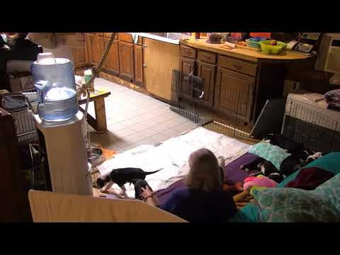 Hurricanes with cp Lee vol Diane and Sara arrives end for overnight 10132017