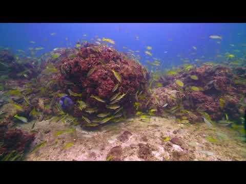 East Coast of Qatar Dive