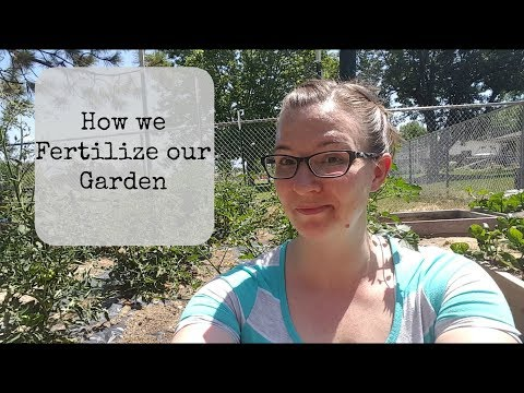 How We Fertilize Our Vegetable Garden - Using Alaskan Fish Fertilizer And Epsom Salt