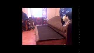 Когда собака остается одна дома(Хозяева ушли на работу! Тем временем ,собака осталась одна...., 2014-09-24T03:44:05.000Z)