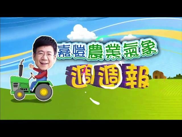 2020.06.15─嘉愷農業氣象週週報